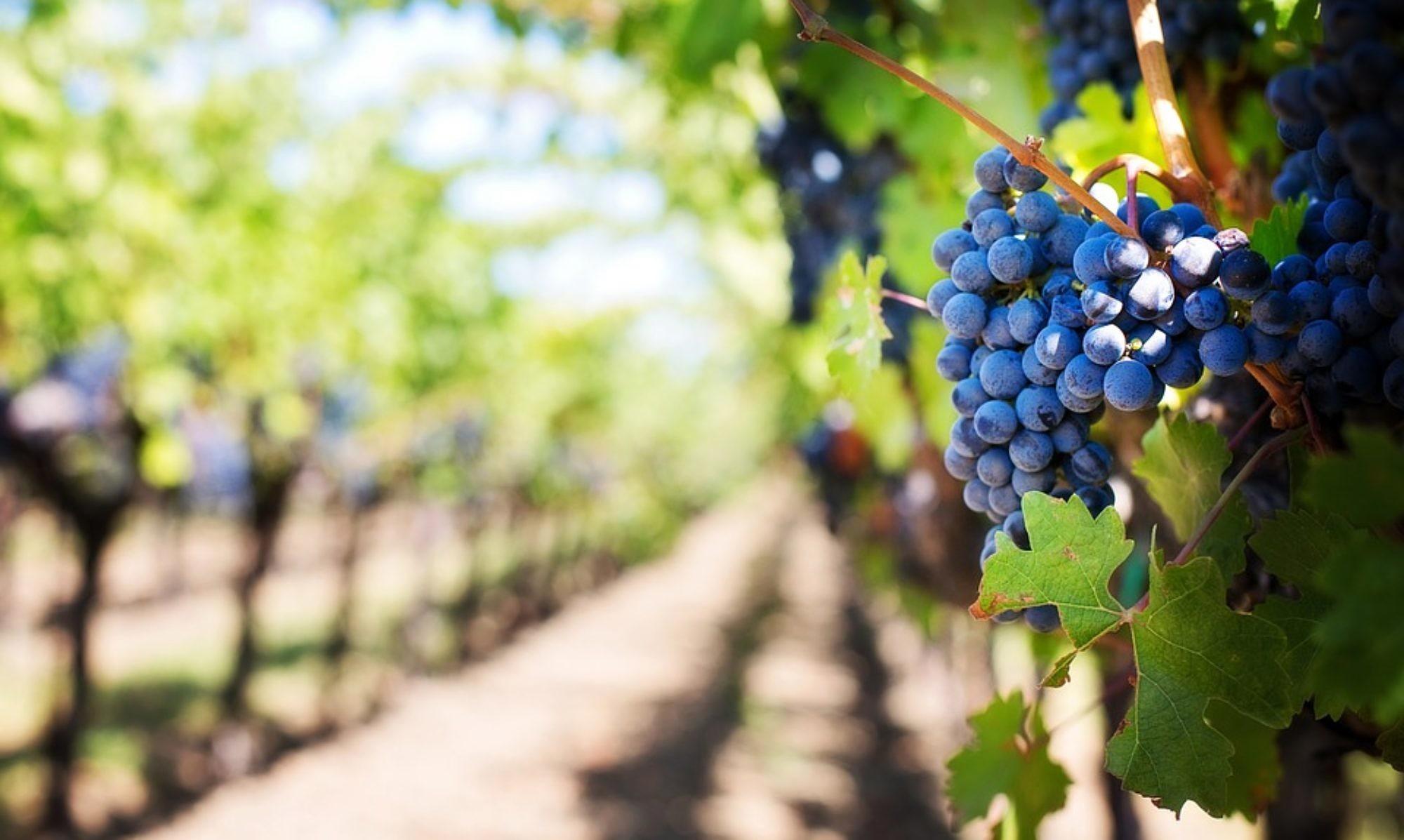 Verein zur Förderung der Britzer Weinkultur e.V.